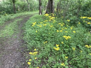 Trail Descriptions & Map – Woodlands Conservancy