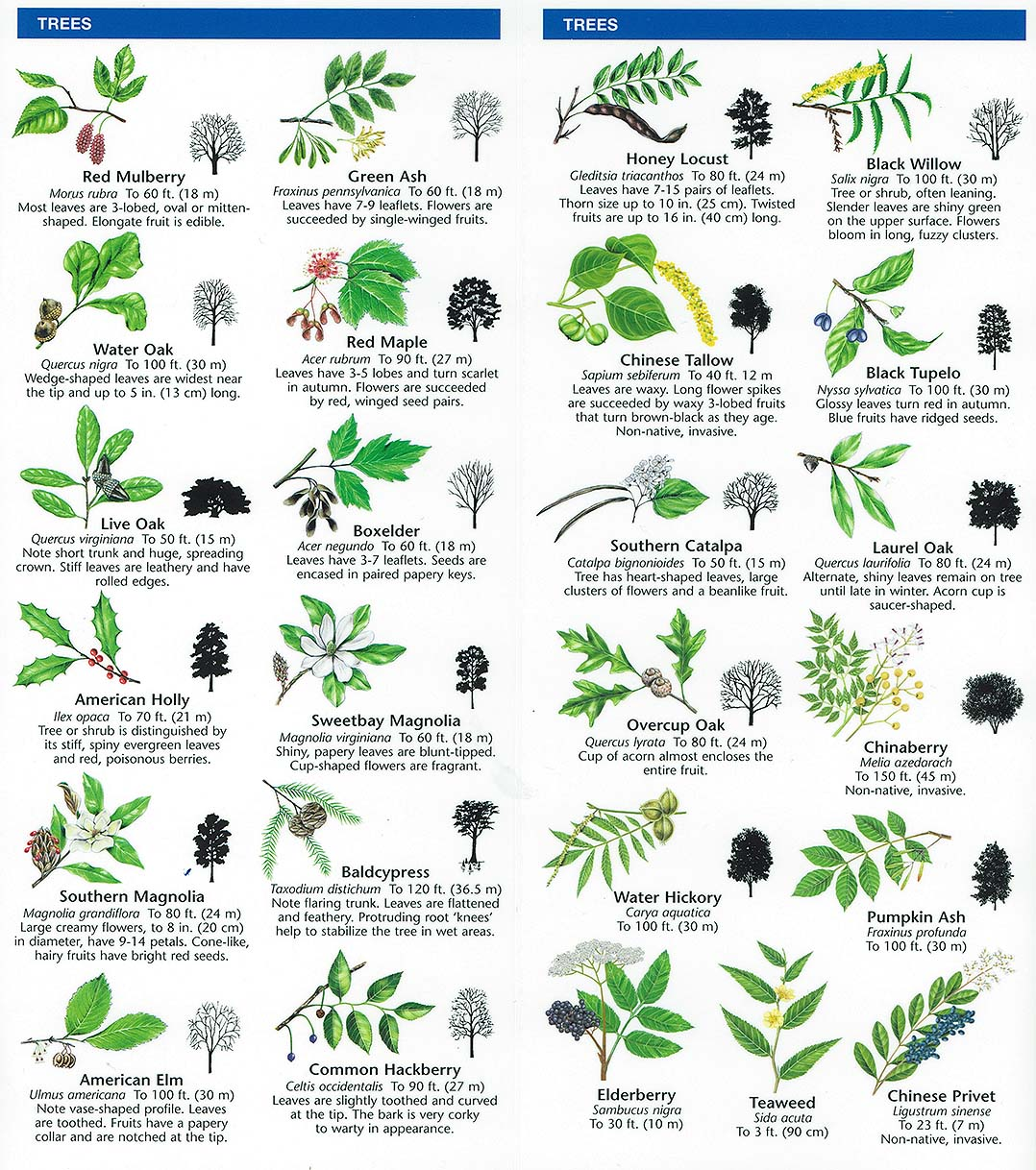 plant collection and identification Essential to identify canopy plants and to collect and document voucher  specimens for  for proper identification and botanical study) and leaves from the  upper.
